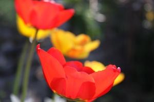 blomster-09-003