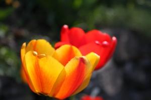 blomster-09-004