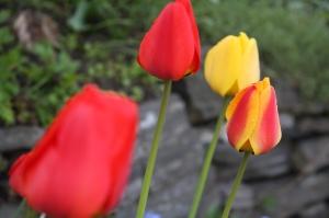 blomster mai 09 002