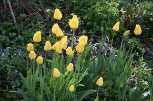 blomster mai 09 004