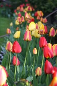 blomster mai 09 008