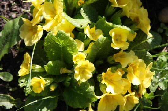 blomster mai 09 014