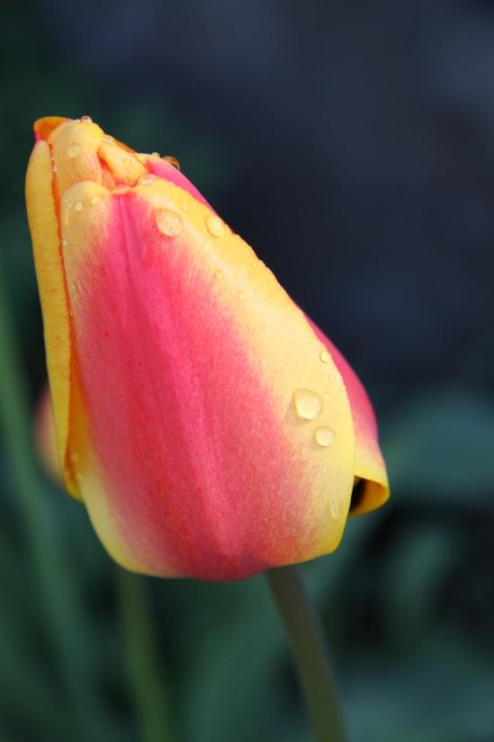 blomster mai 09 020
