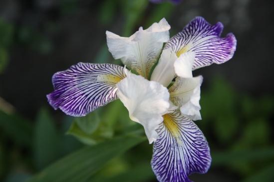 blomster mai 09 026
