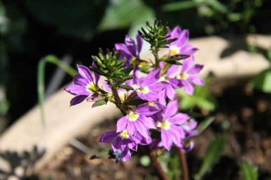 blomster mai 09 033