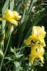 blomster mai 09 042