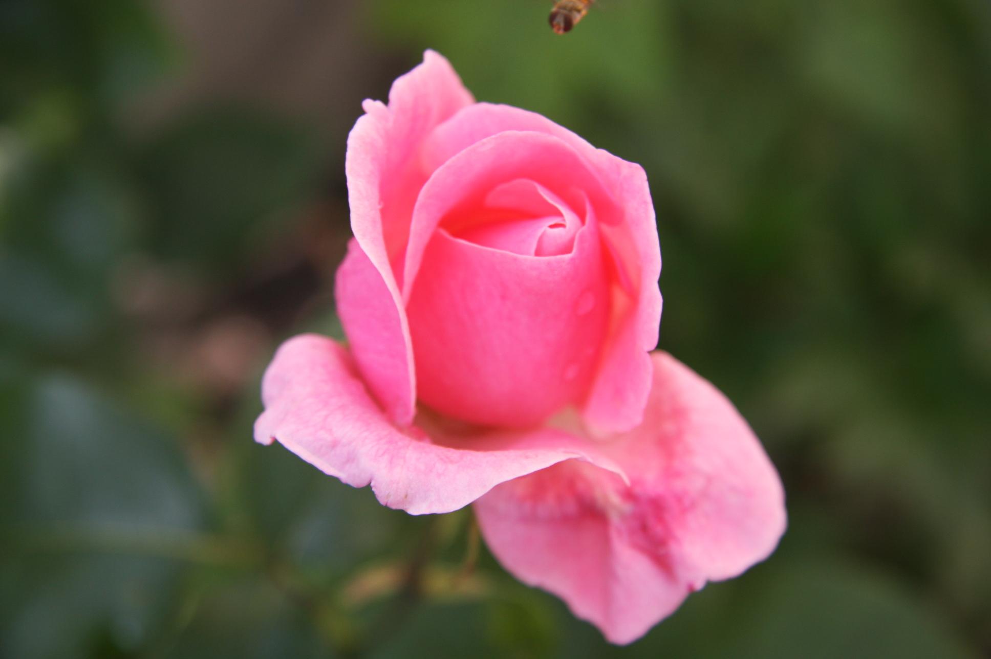 blomsterbilder   ST&#2...